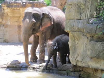 Слоны мало спят