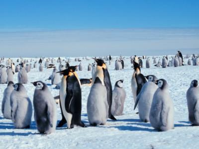 Увидеть пингвинов можно в Перу