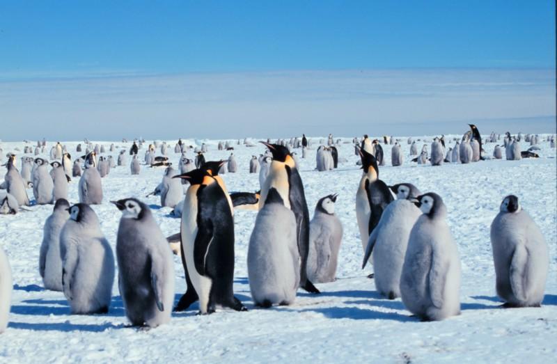 Пять мест мира, где можно увидеть пингвинов