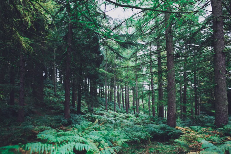 Лес помогает поумнеть