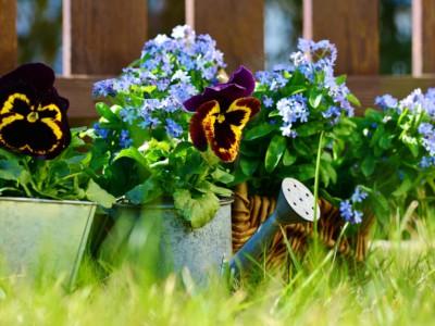 Садоводство полезно