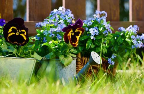 Шесть оснований немедленно заняться садоводством
