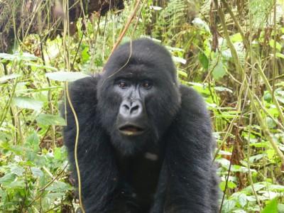 Путешествия для любителей животных: Руанда