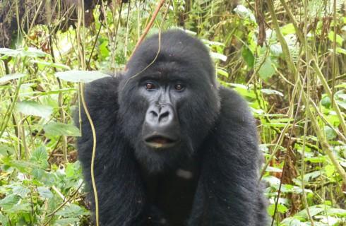 Пять лучших направлений путешествий для любителей животных