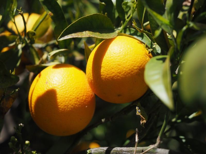Самый простой способ почистить апельсин