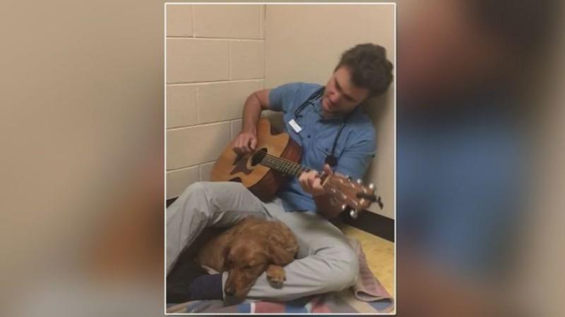 Ветеринар успокаивает пациентов песней