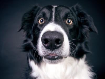 Обоняние человека такое же, как и у собак