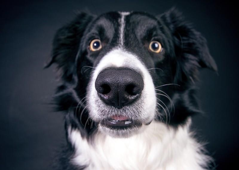 Миф разрушен: люди чувствуют запах не хуже собак