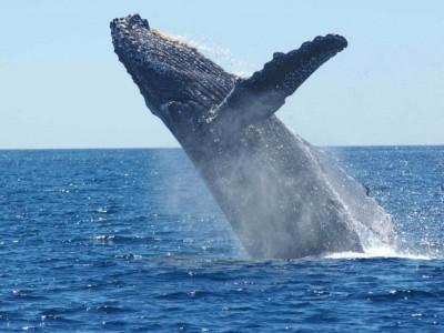 Причиной гигантизма китов стали климатические изменения