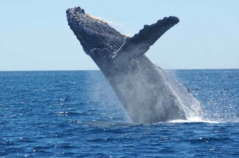 Ученые назвали причину появления огромных морских животных