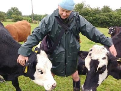 Джей Уайлд с коровами