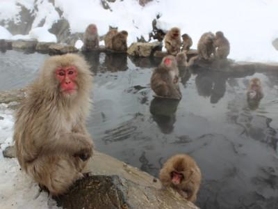 Приматы греются в источнике