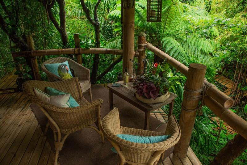На создание джунглей уйдет 20 лет