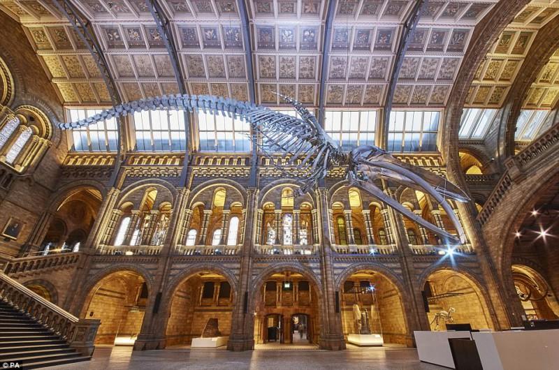 Музей естествознания в Лондоне агитирует за любовь к живому миру