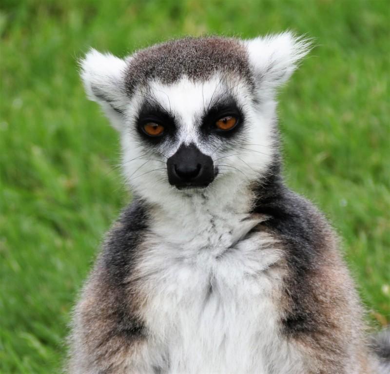 Десять отборных фактов о Мадагаскаре