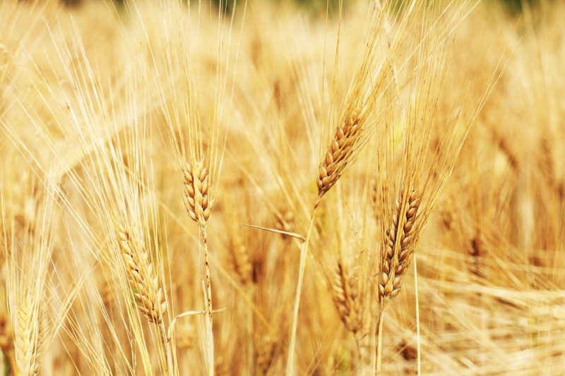 Российским сельским хозяйством займутся роботы