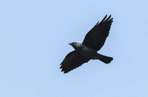 Птицы умеют экономить энергию в полете