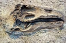 Сломанные кости динозавров нашли в Красноярском крае
