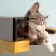 Топ-10 игрушек для кошек