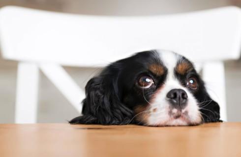 Какие продукты опасны для собак