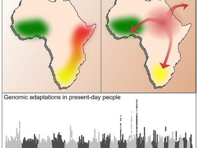 График демографического разнообразия Африки