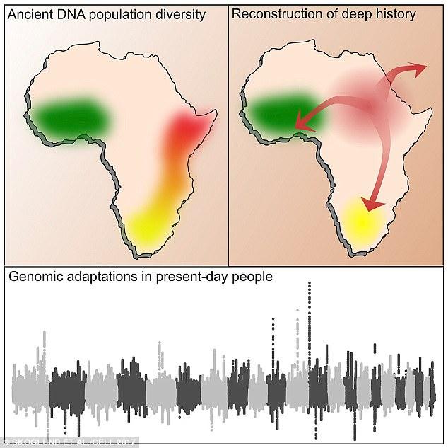 Ученые переписали историю освоения Африки