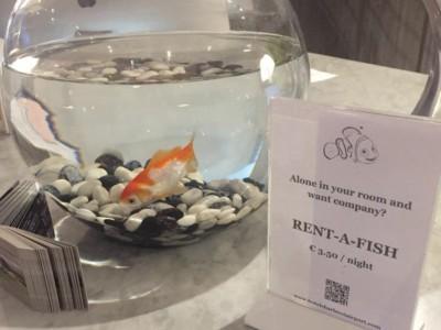 Рыбка напрокат