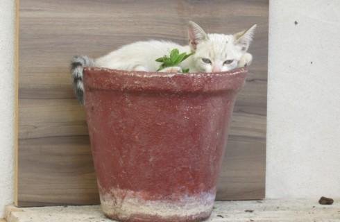Шнобелевскую премию дали за работу о жидких котах