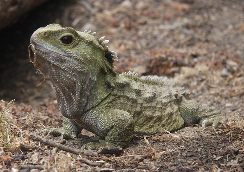 Топ-10 лучших фактов о рептилиях