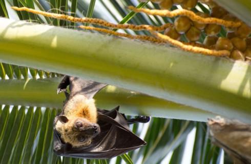 Десять фактов о летучих мышах