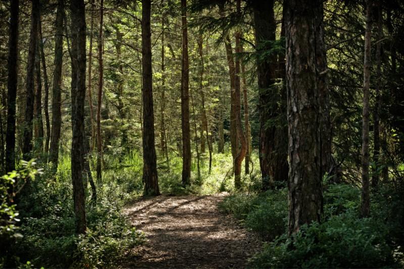 Найдены первые физические доказательства, насколько лес хорош для мозга