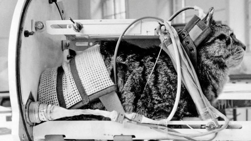 Кошке-космонавту поставят памятник