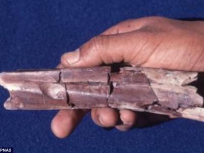 Окаменелая кость с отметинами