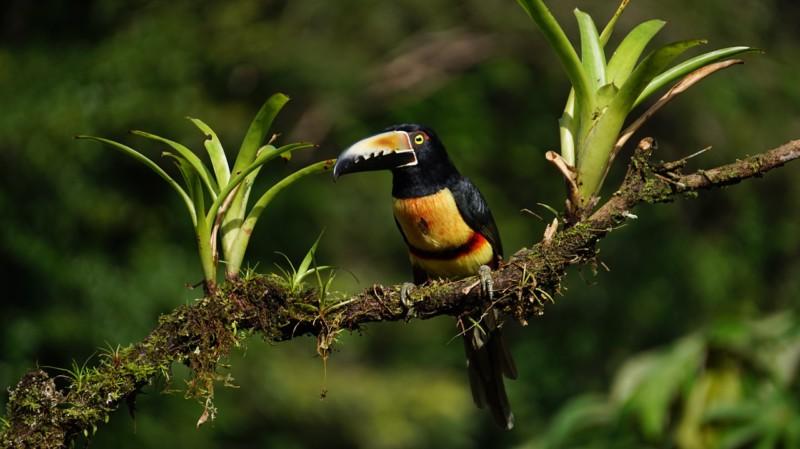 Топ-5 советов по организации лучших каникул в Коста-Рике