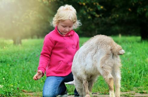 Топ-10 фактов о настоящей доброте