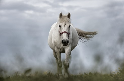 Лошадей невозможно обмануть
