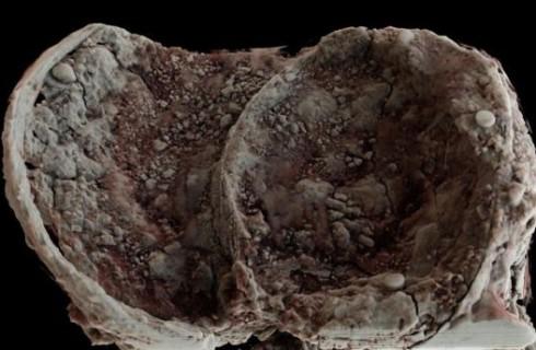 Артефакты Железного века нашли в Великобритании