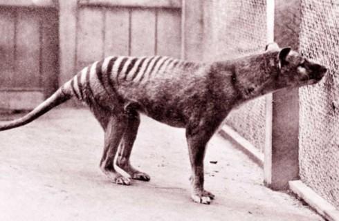 Наука возвращает вымерших животных