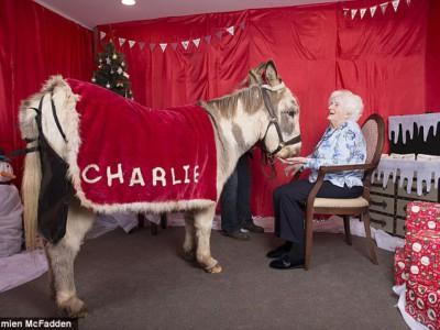 Осел-терапевт Чарли