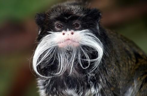 10 лучших фактов о ближайших эволюционных родственниках человека