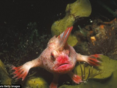 Редкая австралийская рыба