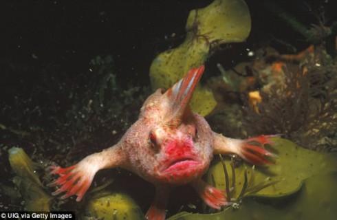 В Австралии нашли редкую рыбу с пальцами