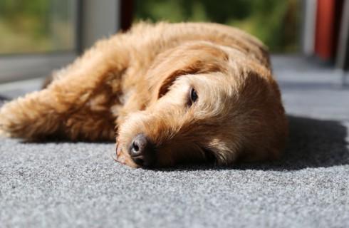 Топ-5 здоровых привычек для домашних животных и их владельцев