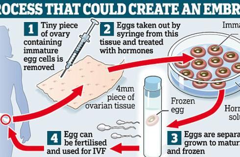 Бесплодные женщины получили шанс забеременеть