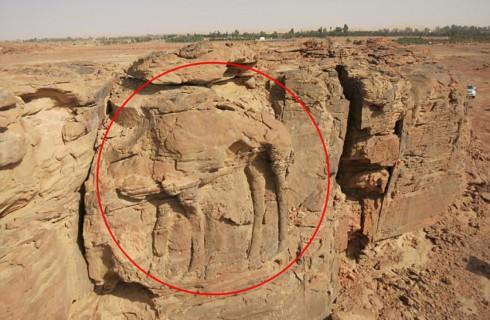 Огромного древнего верблюда нашли в Саудовской Аравии