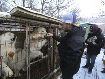 Гас Кенуорти на ферме собак