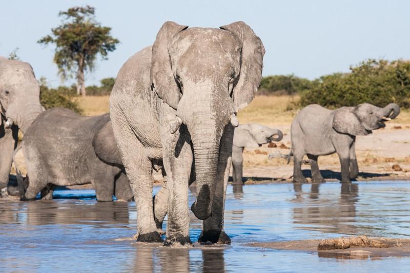 Слоны оказались слишком похожими на людей