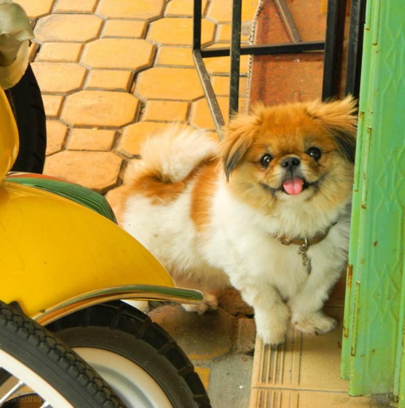 Топ-10 вещей о собаках, которые вы никогда не знали о них