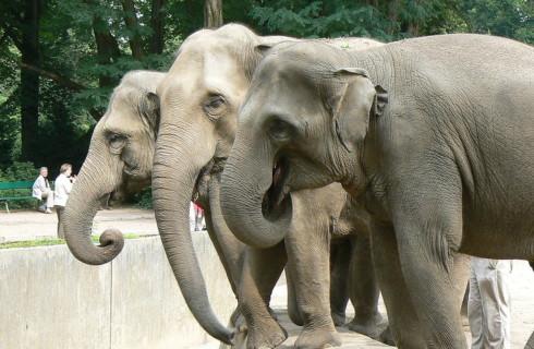 Топ-10 фактов об огромных, но нежных слонах