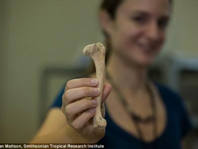 Найденная кость собаки